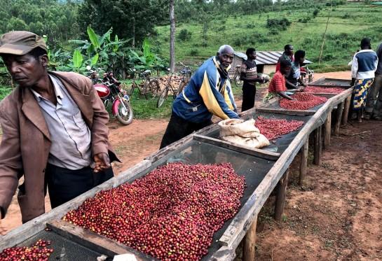 Tanzania Ngorongoro Finagro Honey